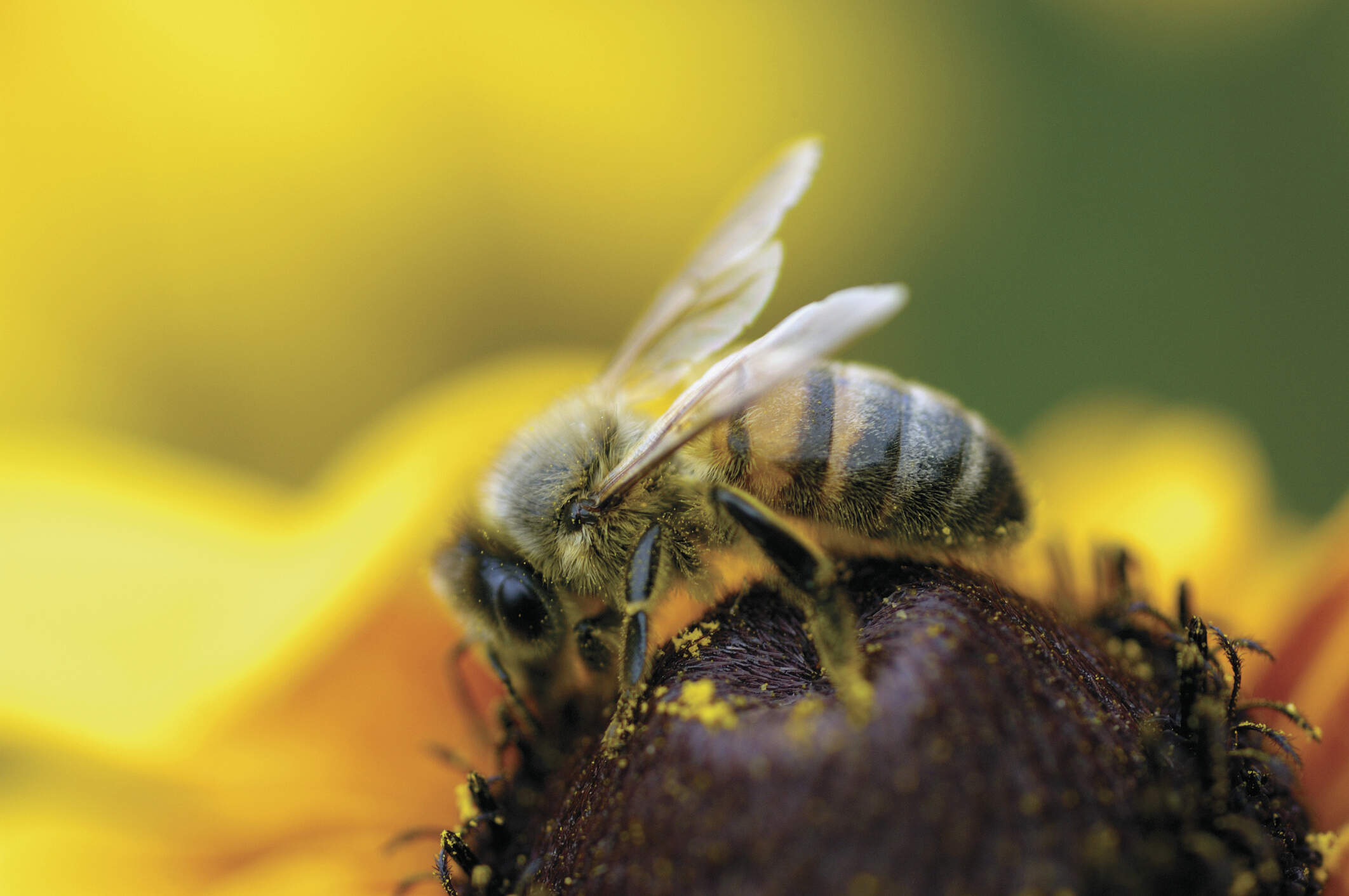 WE ARE ALL WORKER BEES IN THE HIVE OF LIFE