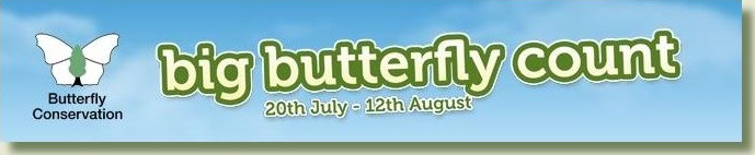 Link to Big Butterfly Count website