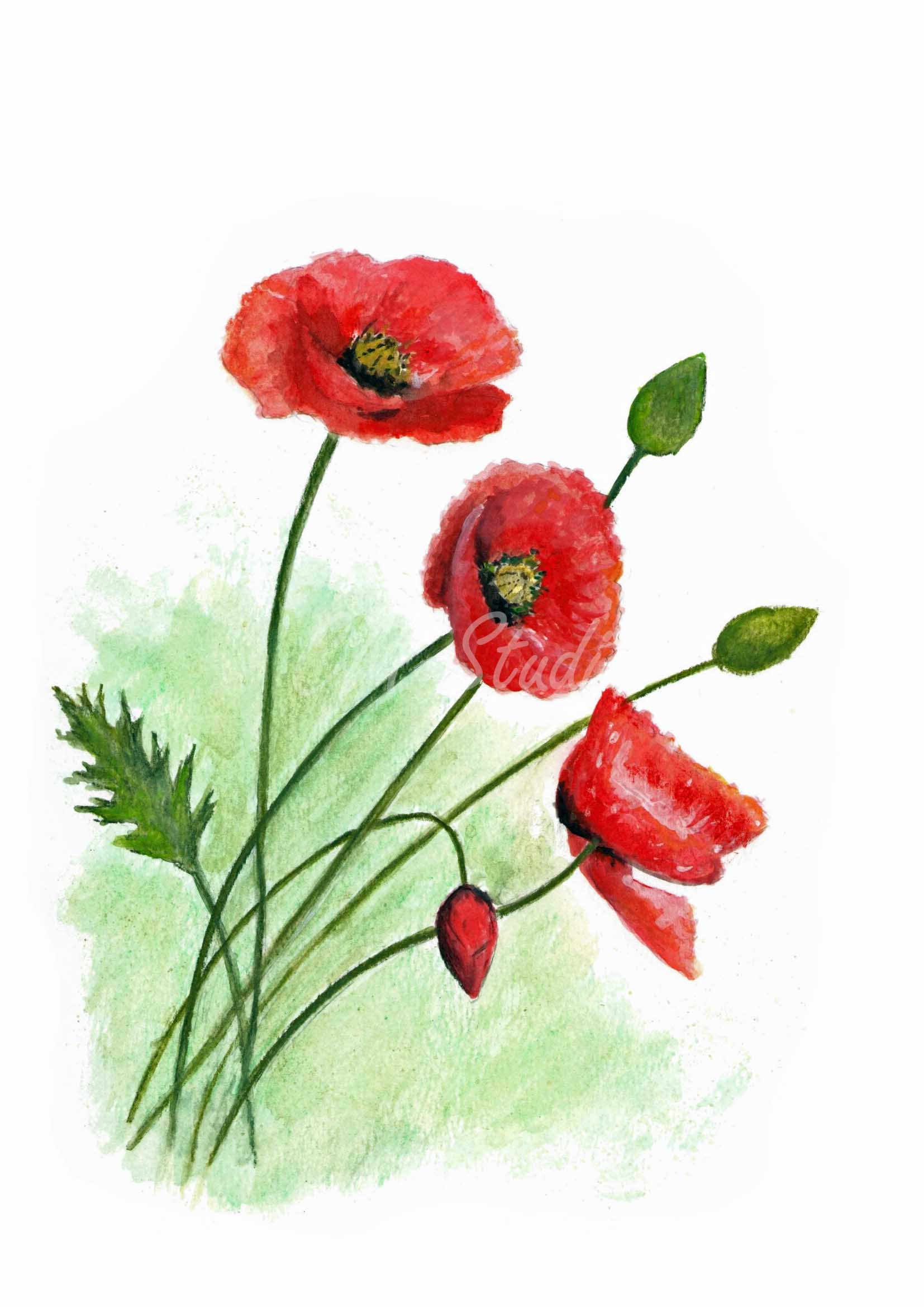 A4 Print Poppies in Watercolour