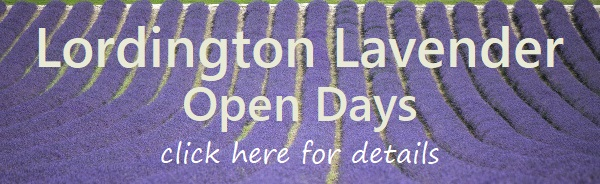 link to Lordington Lavender website