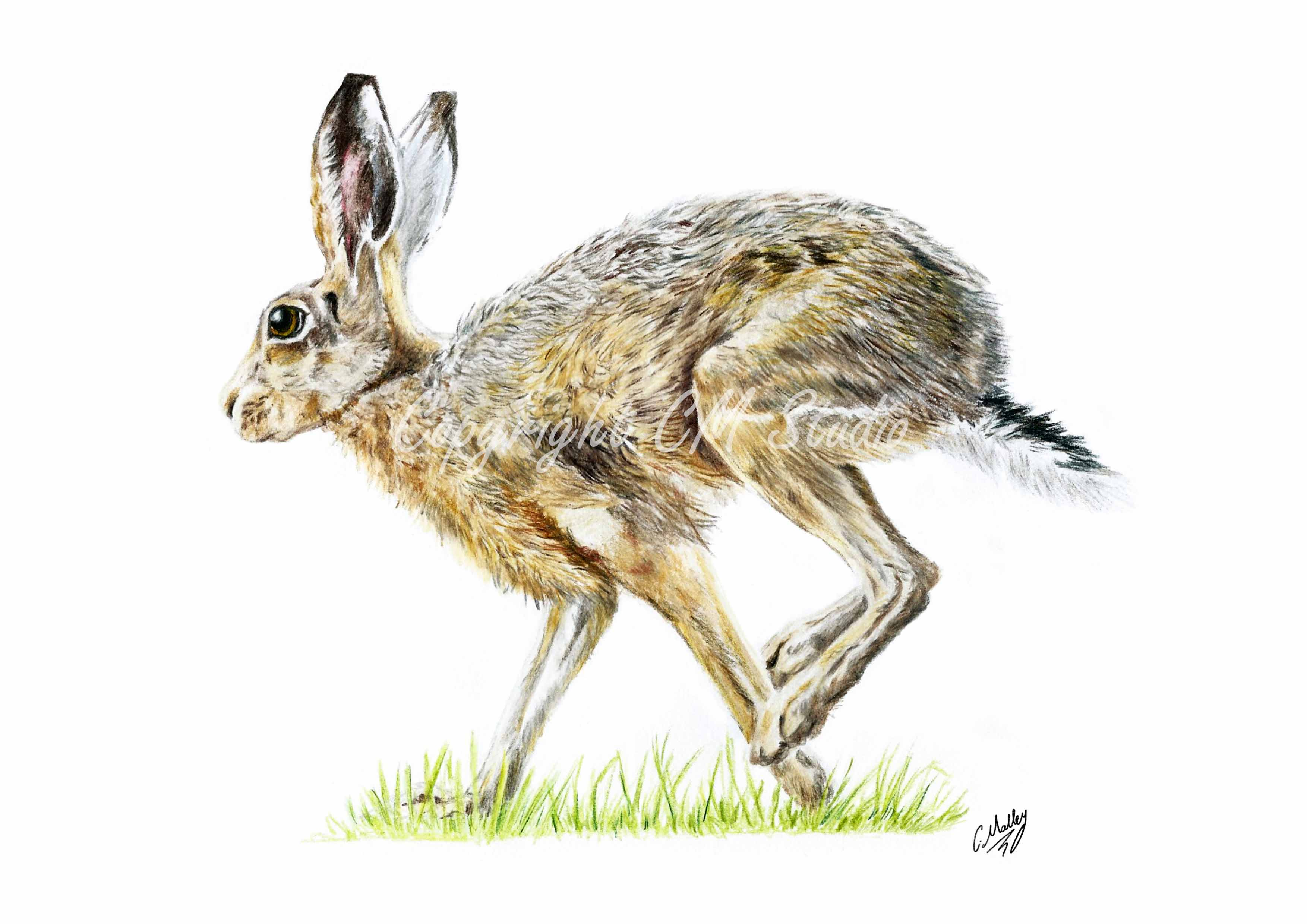 A4 Print Running Hare