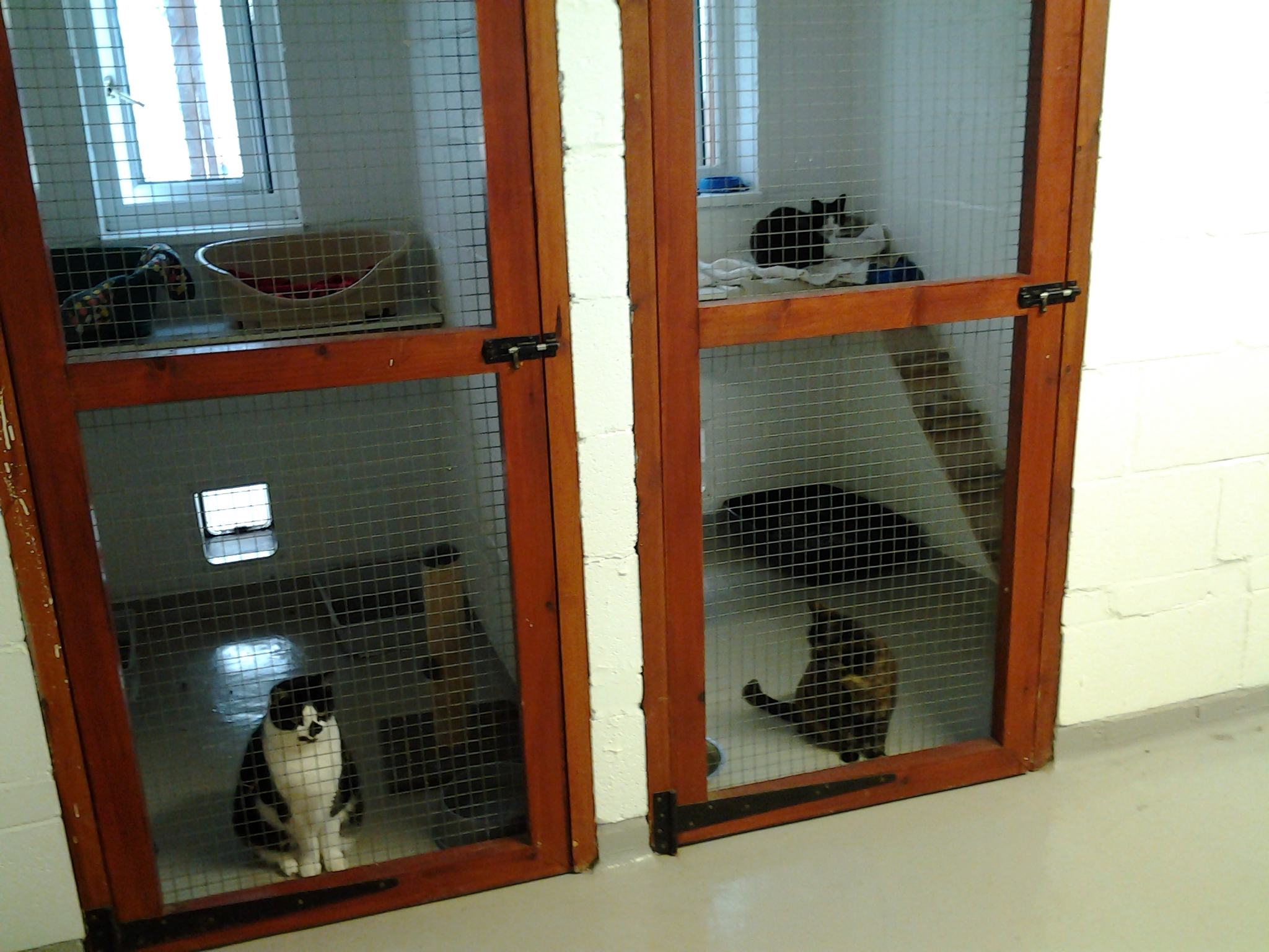 Northwood Grange Cats In A Pen Picture