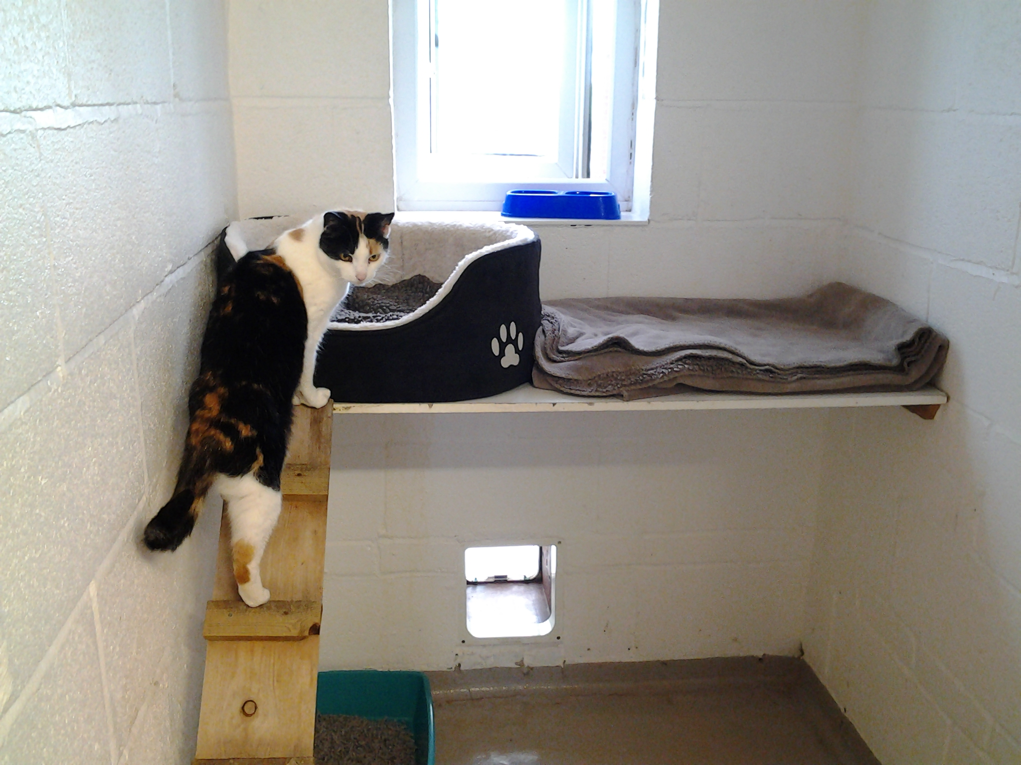 Northwood Grange Cat Climbing Into Bed Picture