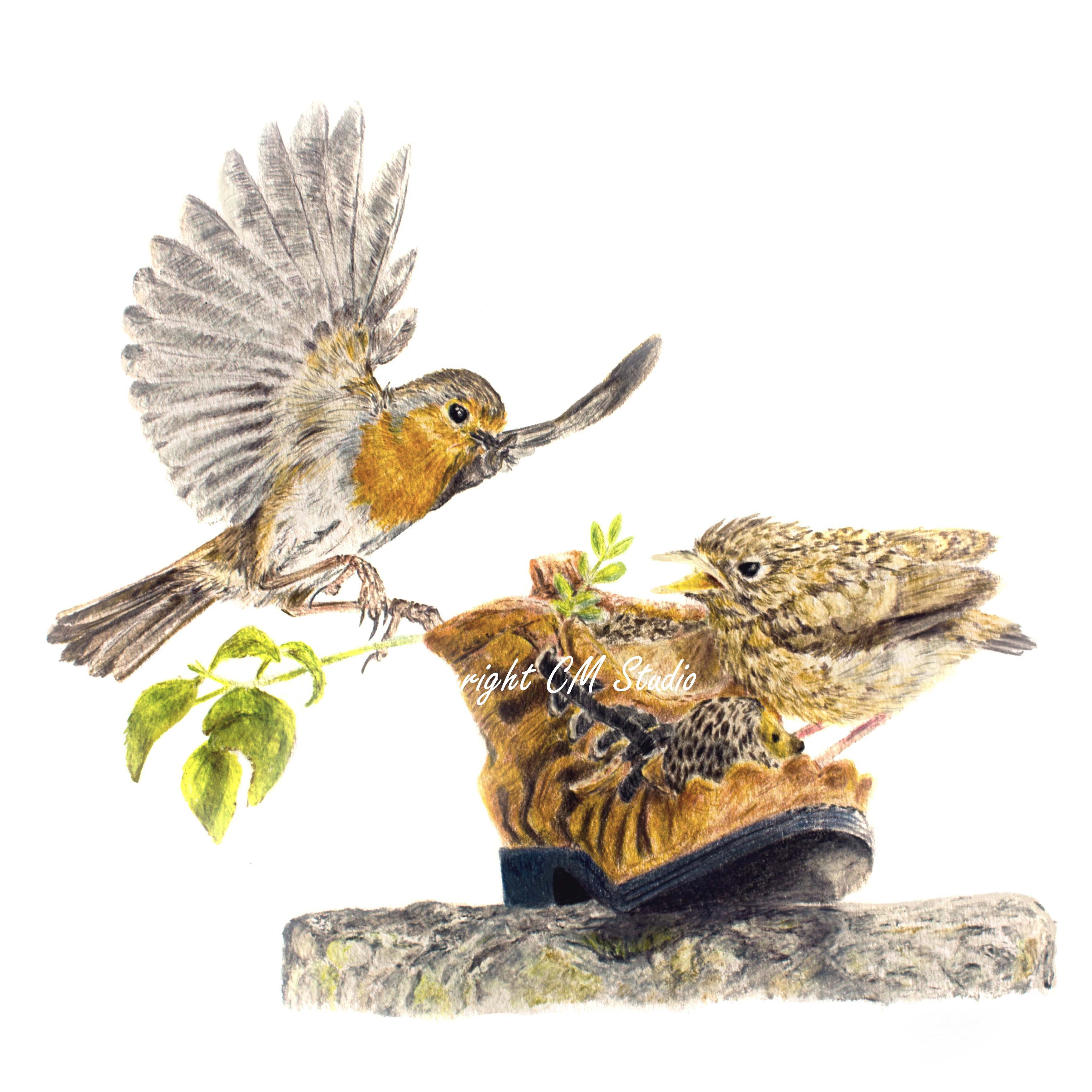 A4 Print Robin Feeding the Young