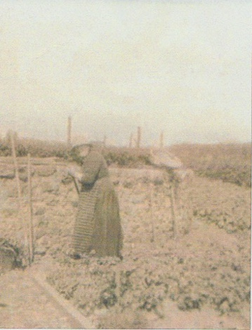Old lady in long dress working in a vegetable garden