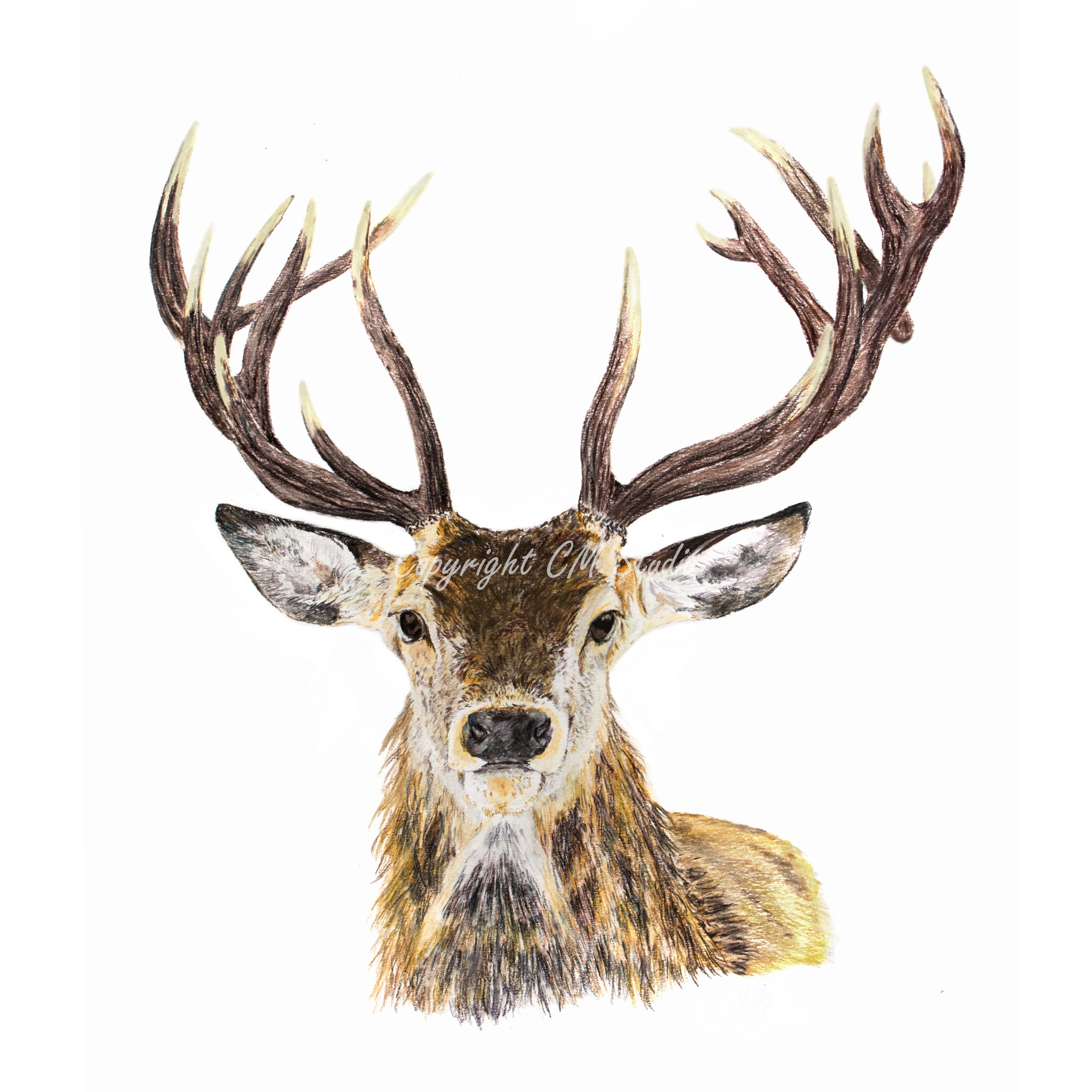 A4 Print Red Deer Stag
