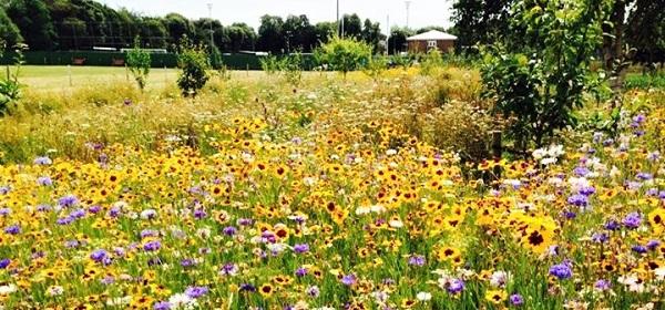 Link to Oaklands Community Garden & Orchard webpage
