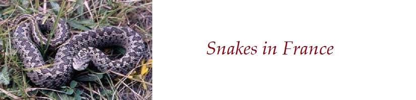 About-the-Snakes-in-France