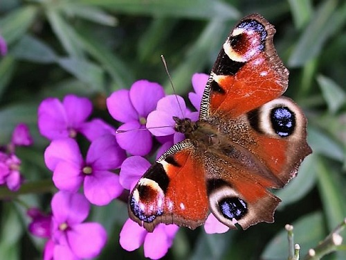 Link to Sussex Butterfly Conservation website