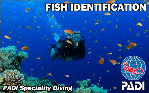 Padi Aware Fish Identification course Speciality