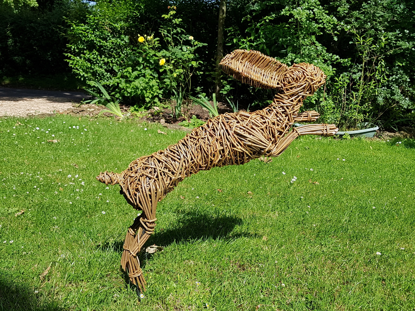 Willow Leaping hare