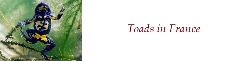 About the toads in France