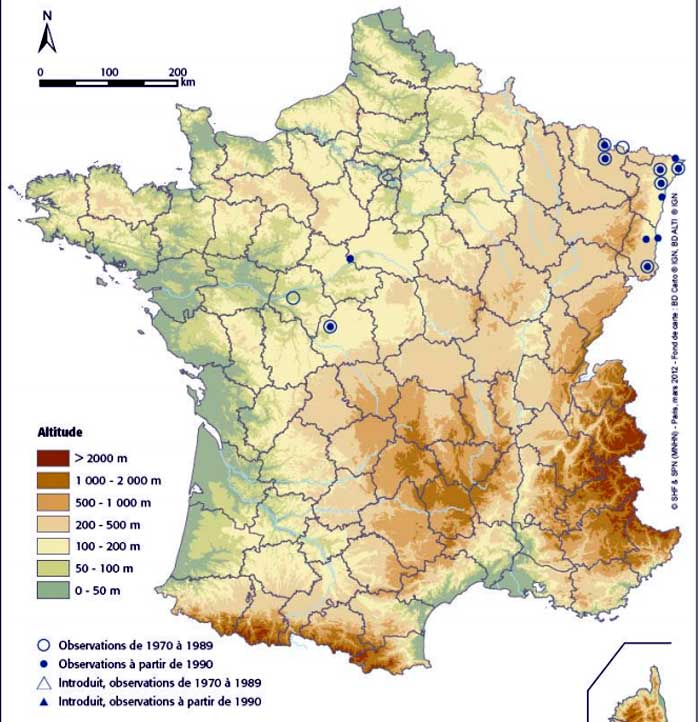Spadefoot toad map France