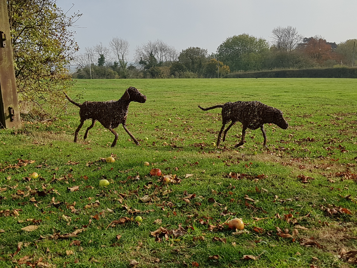 Willow Hounds