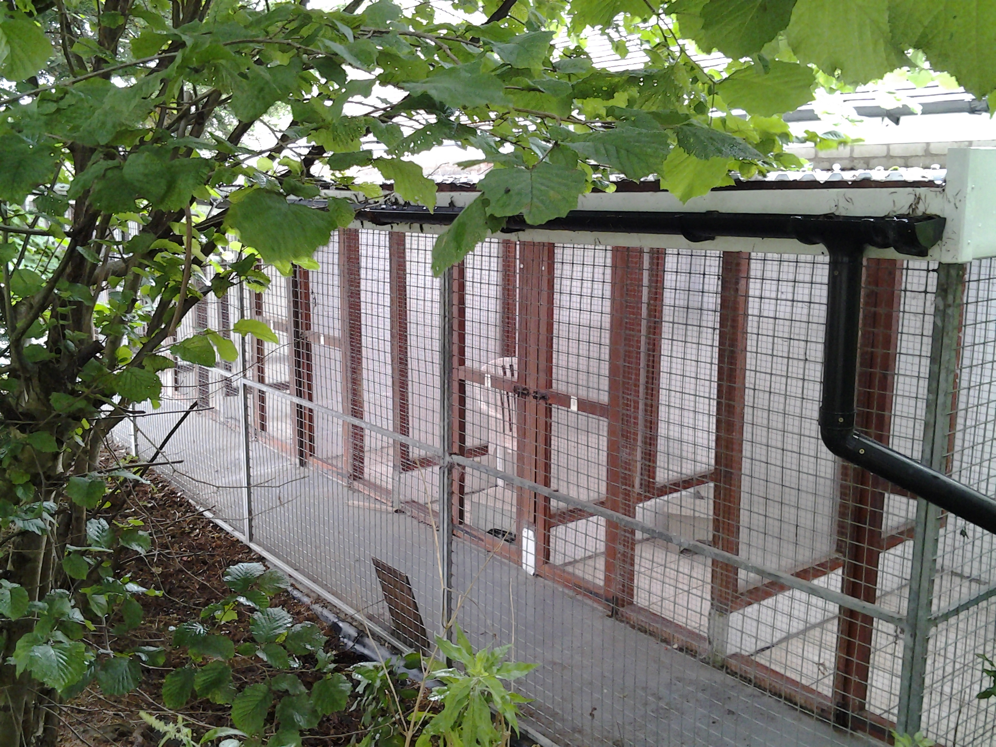 Northwood Grange Cats In An Outdoor Pen Picture