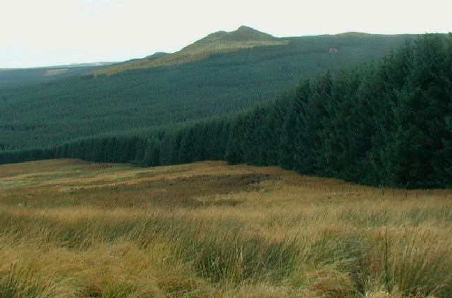 A huge swathe of forestry in the Scottish Borders