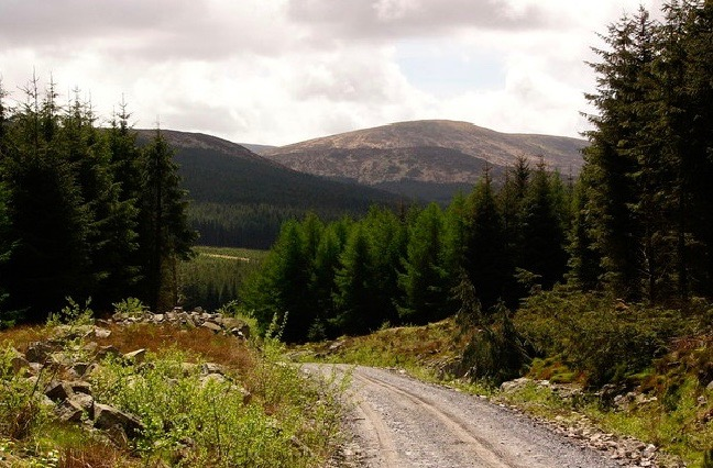 A dirt track in the Galloway Forest