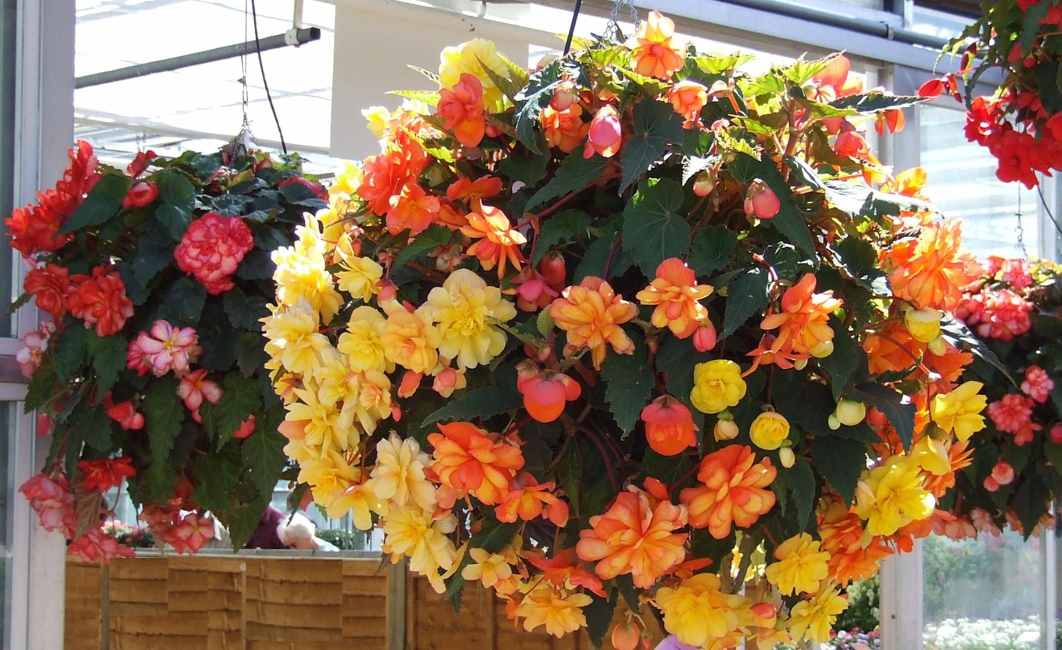 Hanging Baskets Made to Order