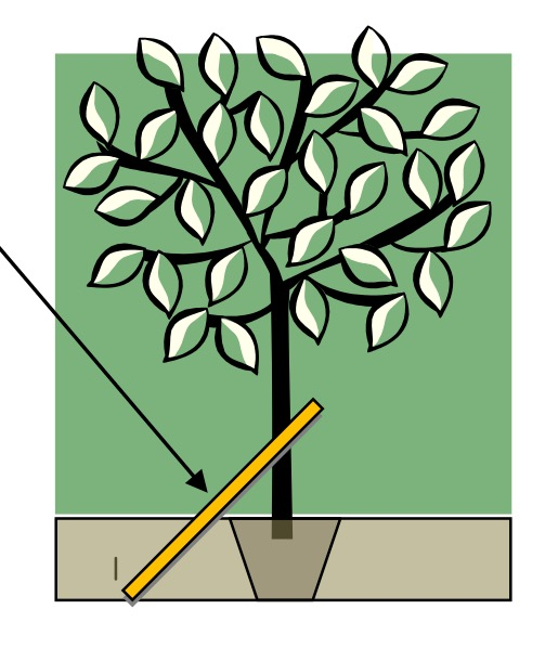 How to use the Tree Stake