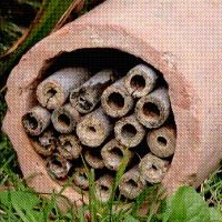 Link to RSPB 'Build a Bug Hotel'