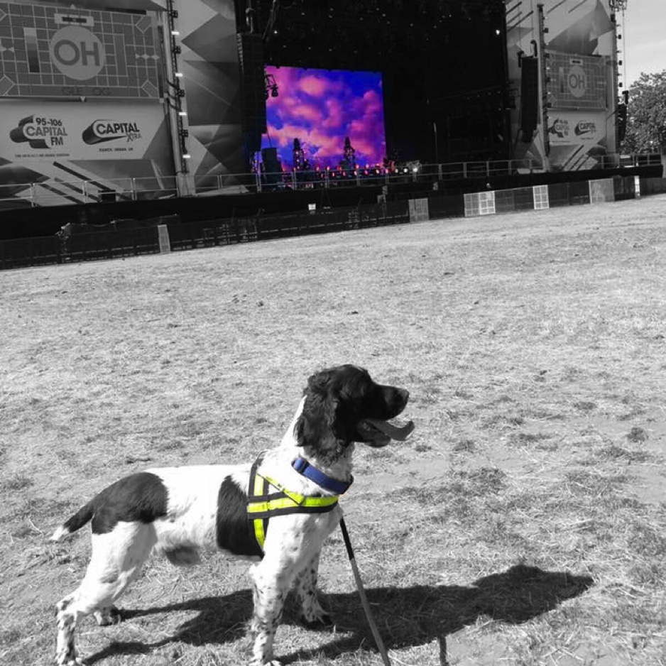 explosive detection dog Inquest Canine