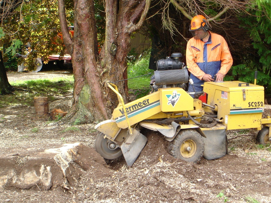 Stump grinding by J R Schad Tree Surgeons Dunblane