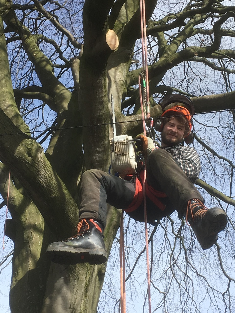 Connor of Julian Schad Tree Services Scotland working up a tree