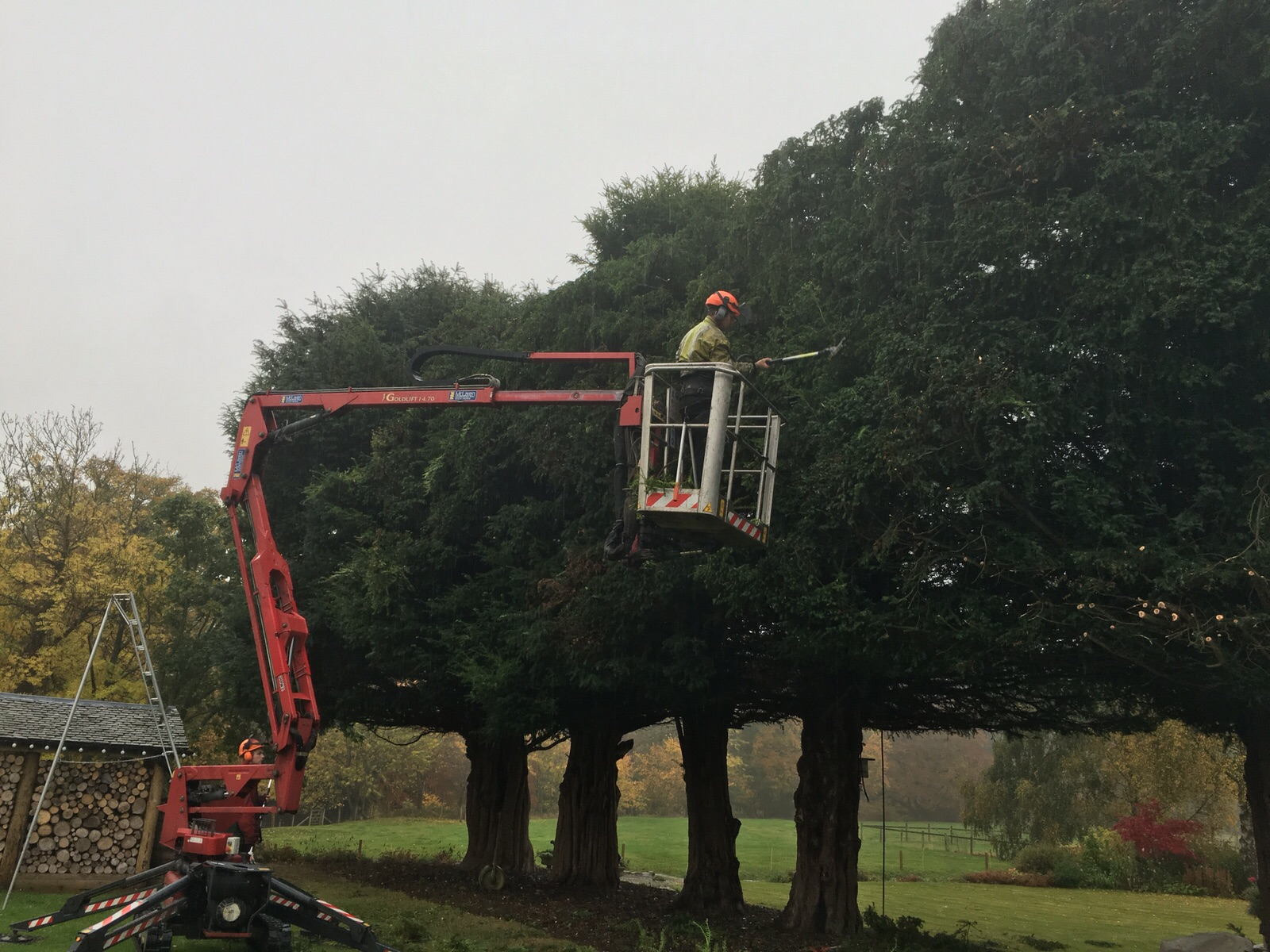 JR Schad Tree Surgeons using a cherry picker for crown thinning and crown lifting of trees