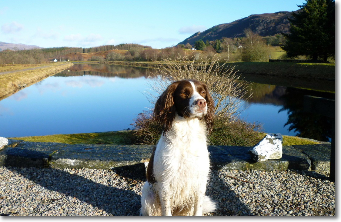 Heidi - our dog loves the great outdoors as Lorien House B&B Guests do