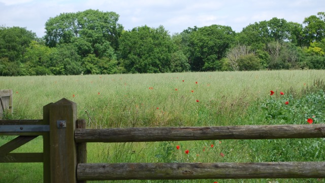 View over the fence Church Hanborough