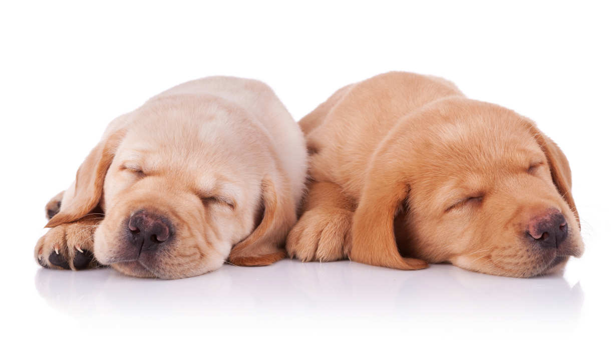 Puppy advice and care WalKeys llp