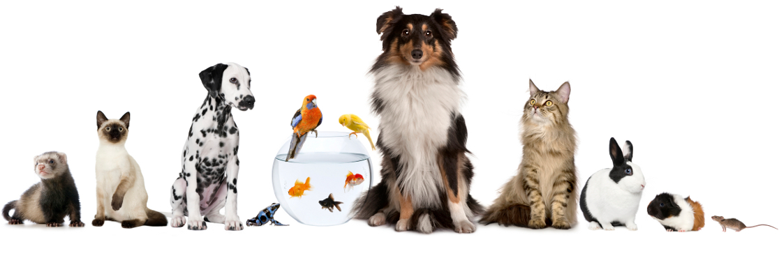 Registered Pet Sitters in Oxfordshire & Berkshire