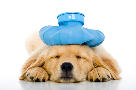 Taking extra special care of your pets WalKeys llp