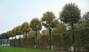 Gardeners Haslemere, Liphook, Midhurst 4
