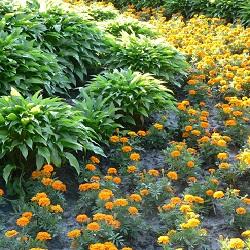 Gardening Services, Haslemere, Midhurst, Liphook 2