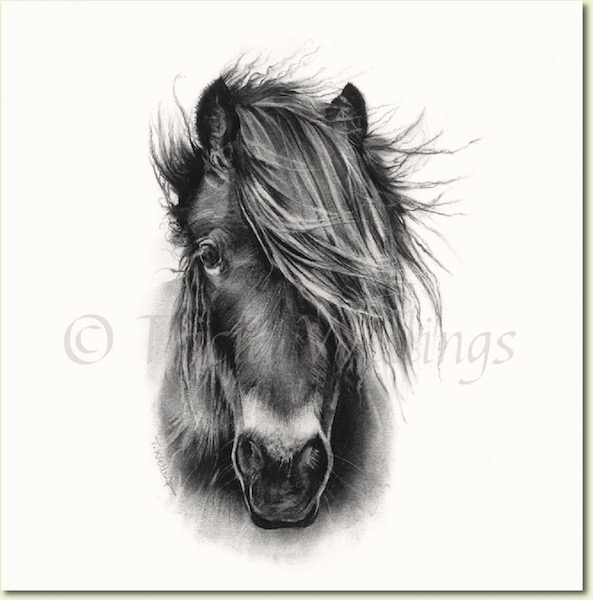 A horse portrait by Tricia Wellings fine artist