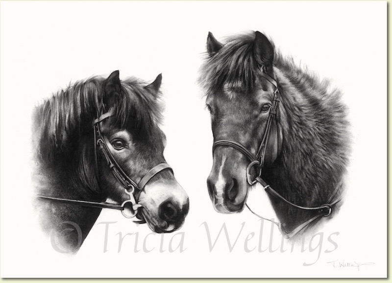 Portrait of two horses by Tricia Wellings of Chichester