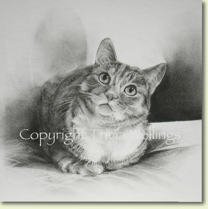 Charcoal portrait of an inquisitive cat by Tricia Wellings Fine Art Chichester