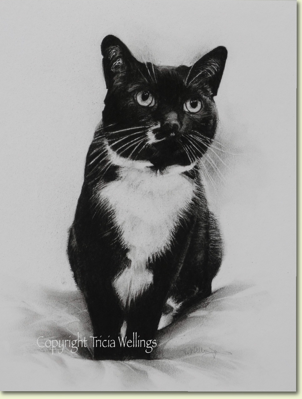 Tricia Wellings cat portrait in charcoal