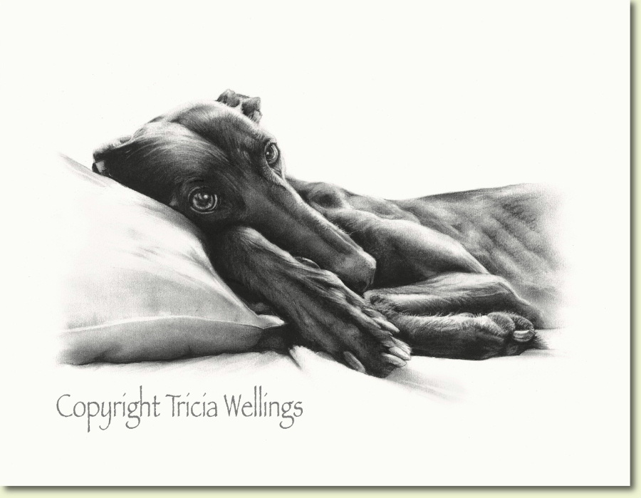 Charcoal drawing of a greyhound by London animal portraitist Tricia Wellings