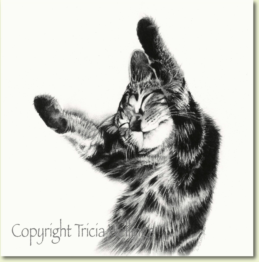 Charcoal portrait of Coco the Cat available for sale on the Tricia Wellings website, animal portraitist Chichester