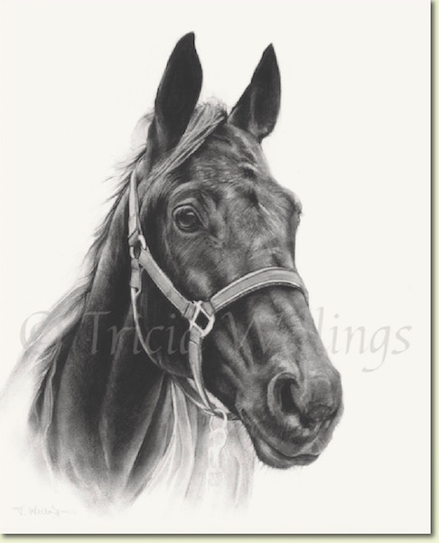 Ally, a horse portrait by Tricia Wellings Fine Art