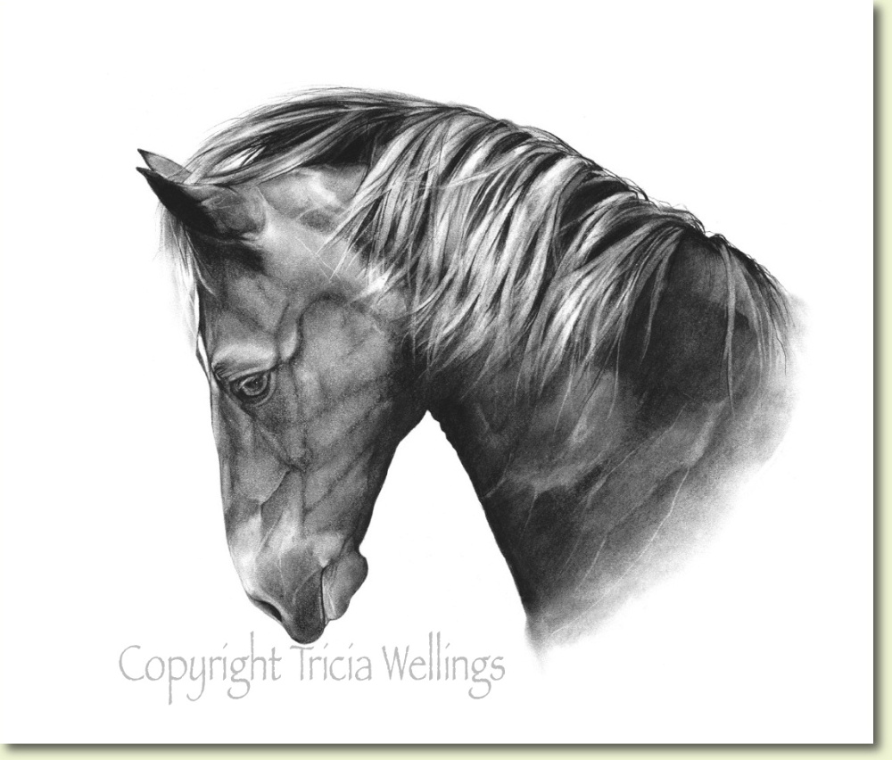 Horse portrait for sale by Tricia Wellings animal portraitist of Chichester UK