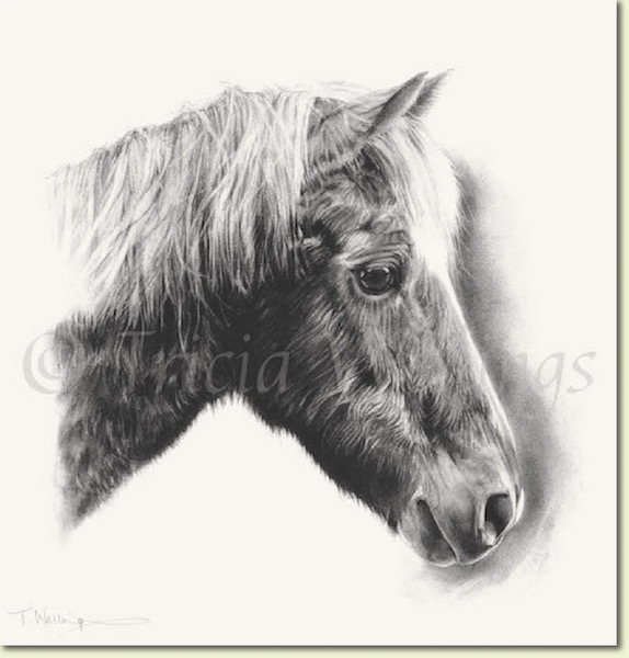 Horse portrait, Copper, by Tricia Wellings Fine Art of Chichester