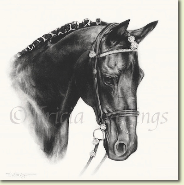 Horse portrait of Milo by Tricia Wellings Chichester