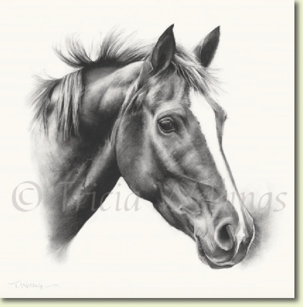 Charcoal drawing of horse Roo by Tricia Wellings, West Sussex