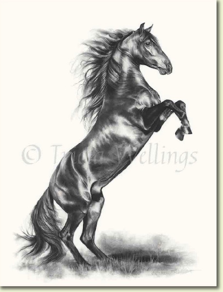 Portrait of a horse rearing by Tricia Wellings Fine Artist specialising in animal portraits, London