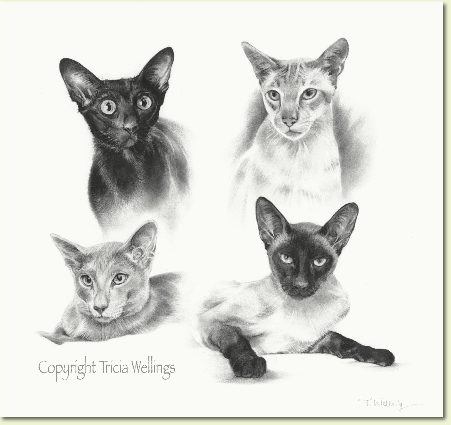 Four Siamese cats in a pet portrait by Tricia Wellings Fine Artist