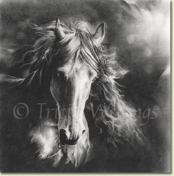 Charcoal horse drawing for sale