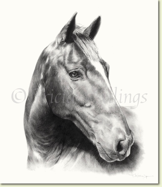 Horse portraits by Tricia Wellings Fine Art Chichester